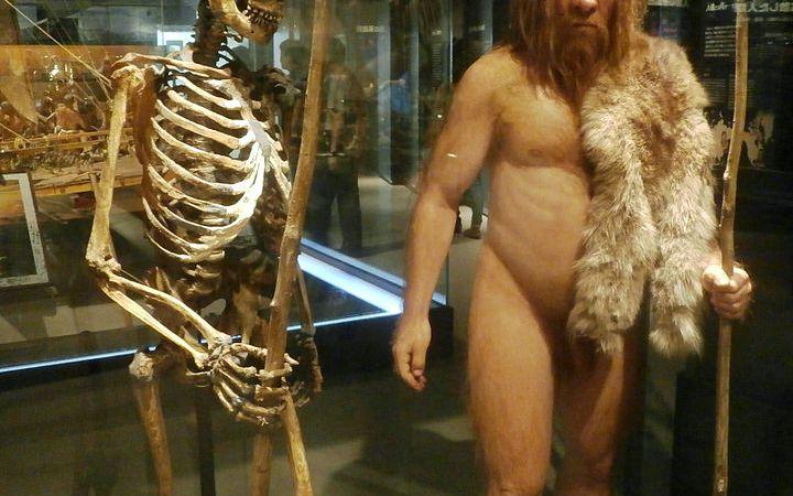 L'eredità genetica del neanderthal