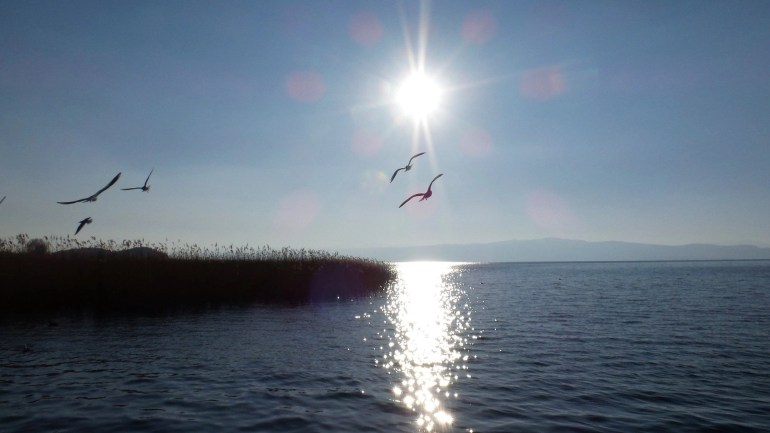 Gulls, also known as, laridea, are flying over the lake as the sun start to set to go down over Lake Ohrid. Romantic picture watching the sunset.