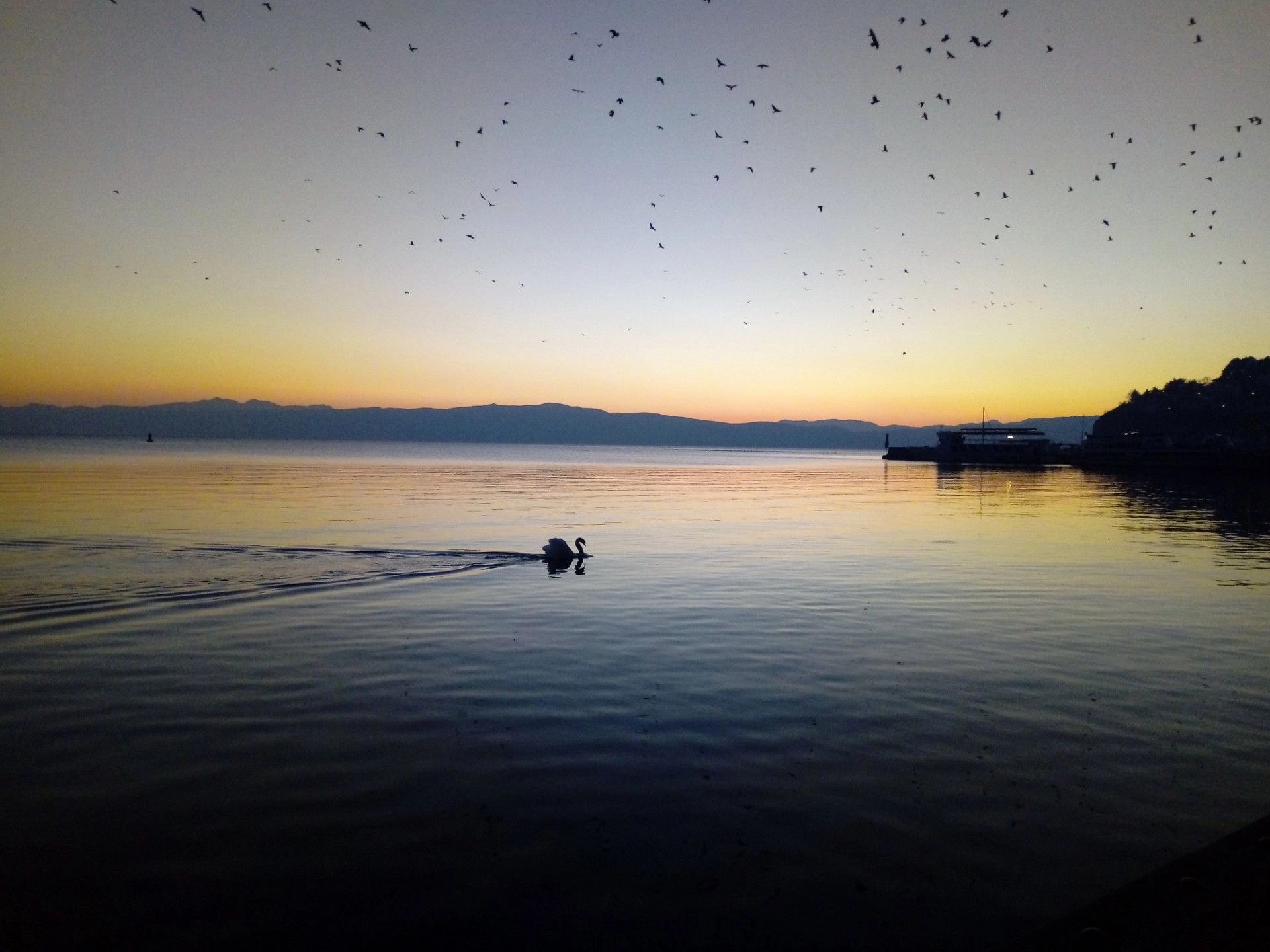 Swan in Lake Ohrid during a sunset. Watching the sunset over Lake Ohrid. Beautiful sunset photos. Amazing sunset photos.