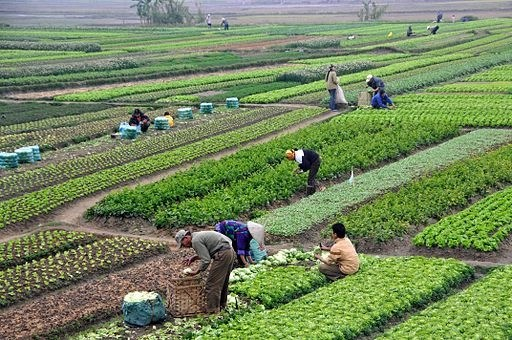 Farmers on a farmland picking products in Vietnam