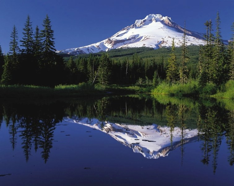Body of water with a green forest around it with Mount Hood in Oregon in the background.