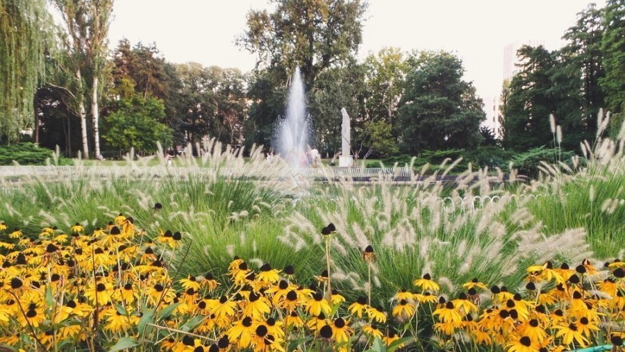 Yellow flowers in front of a fountain in the Dunavski Park (Novi Sad, Serbia).