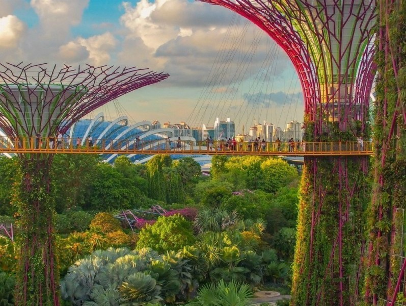 Close up view of the Supertree Grove in Singapore.