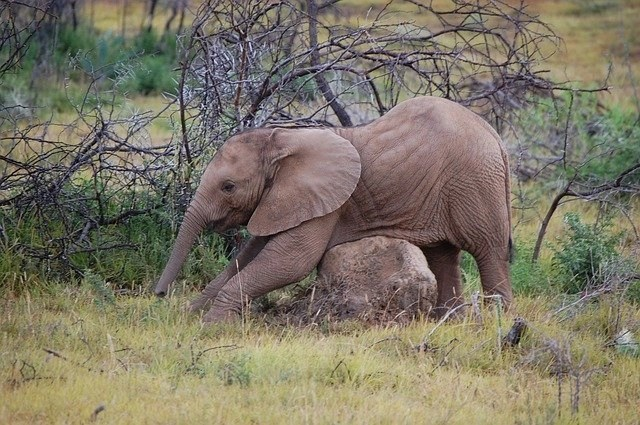 Elephont streching in September is the best time to go on a safari in South Africa