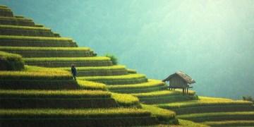 Vietnam green fields like stairs.