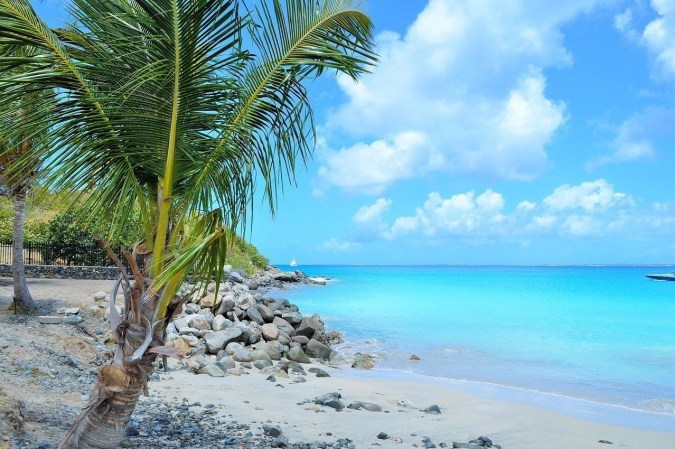 Palm tree on a beach with body of water.