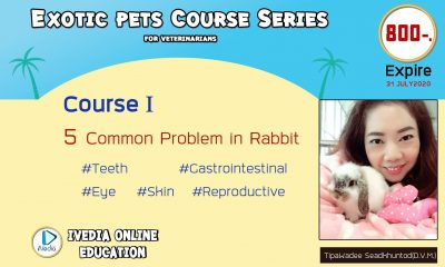 5 Common problems in rabbit