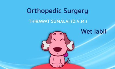 Orthopedic Surgery (Wet lab) II