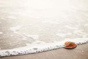 conchiglia in riva al mare