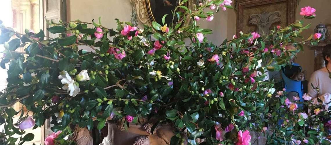la bella fioritura delle camelie autunnali in mostra Villa Della Porta Bozzolo
