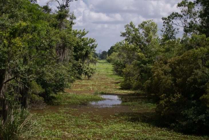Nei bayou della Louisiana dove vivono gli alligatori e crescono i cipressi calvi