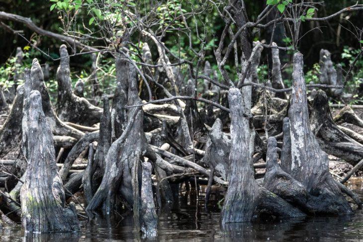 Il fascino delle terre umide un mondo fragile  fatto di percezioni