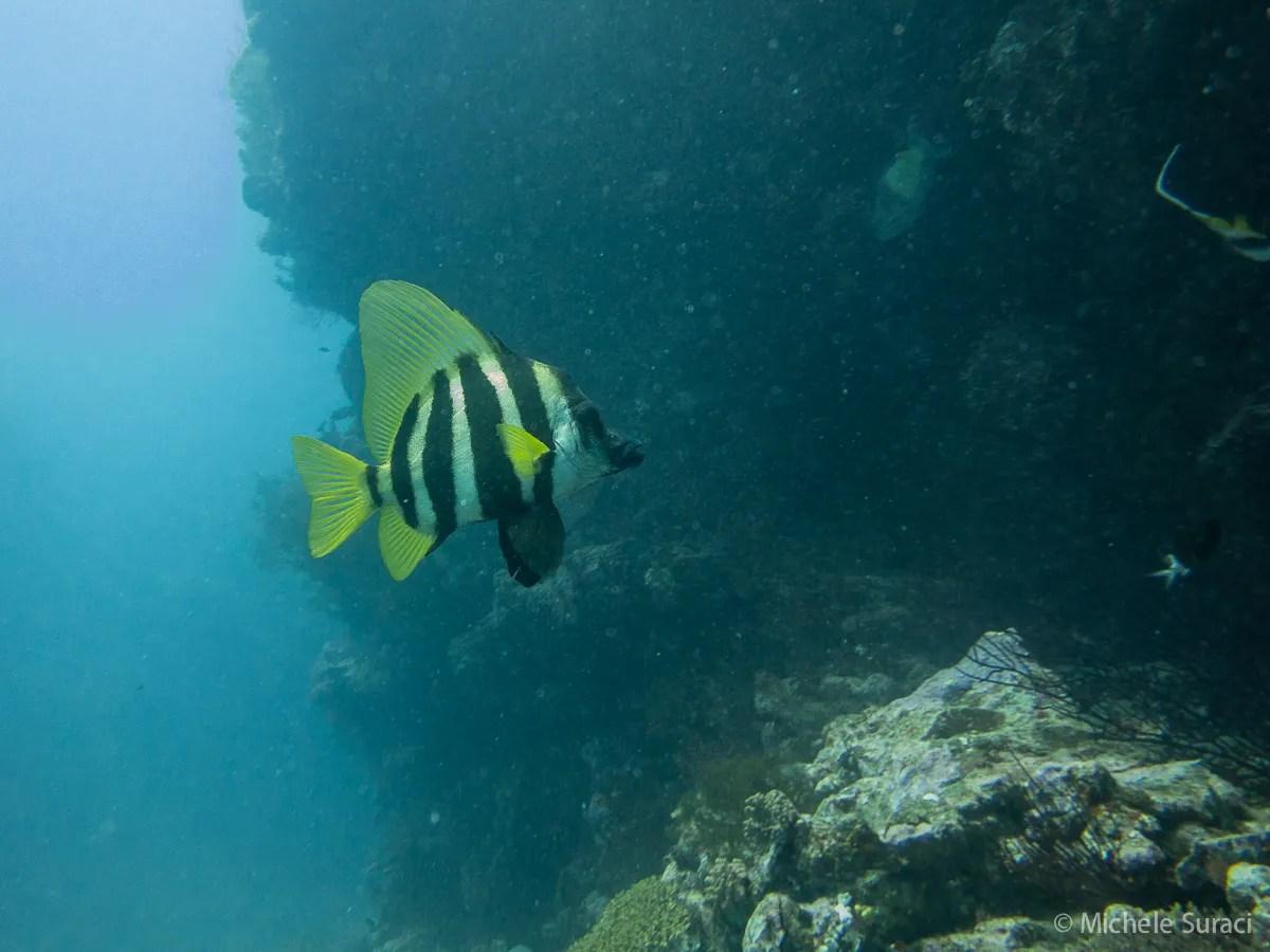 In immersione all'Isola dei Pini