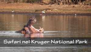 Safari nel Kruger NP