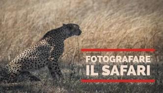 Fotografare il safari immagine evidenzaFotografare il safari immagine evidenza