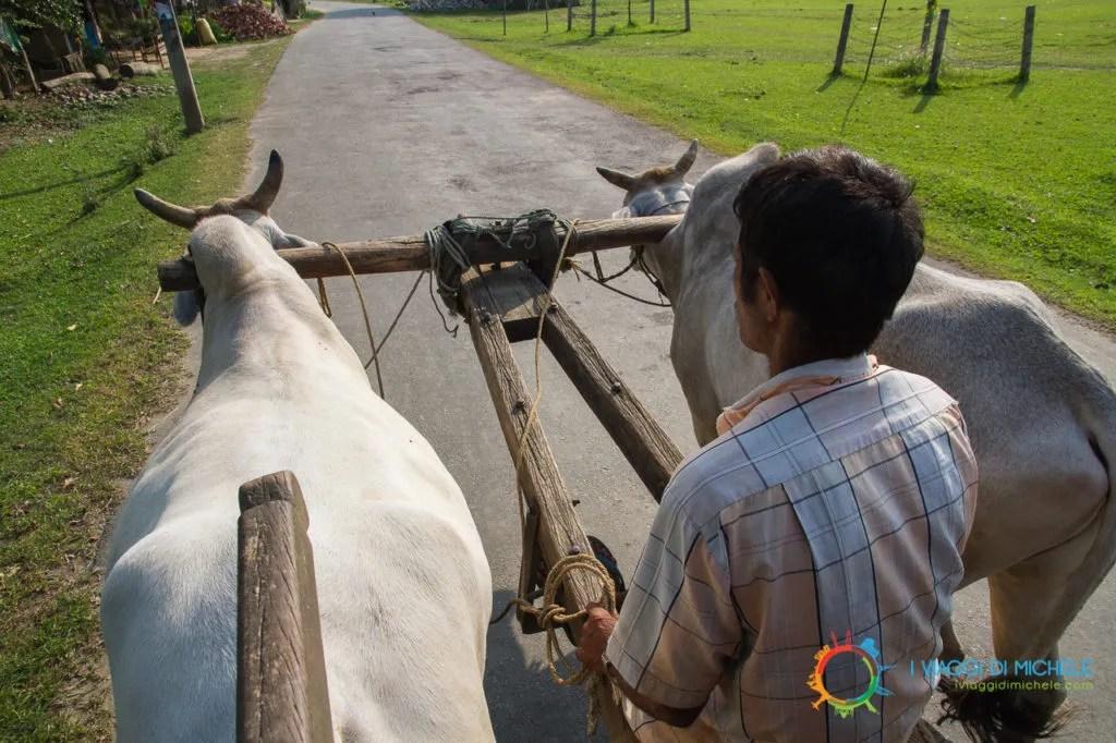 Il viaggio sul carretto - Chitwan National Park