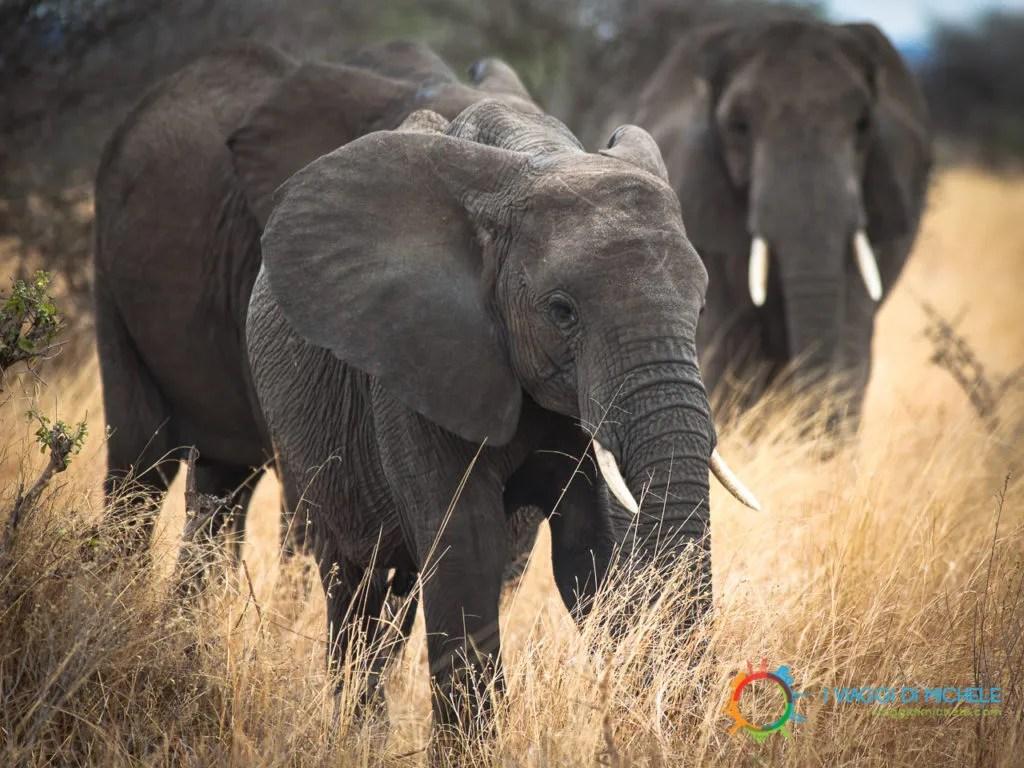 Gi elefanti del Tarangire National Park