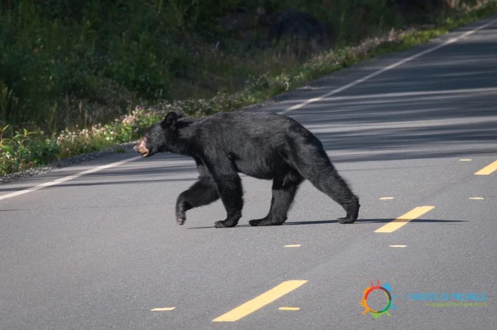 Incontri sulle strade dello Yukon