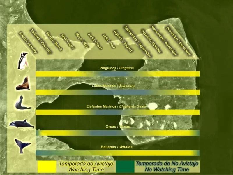 Calendario Fauna - Come visitare la Penisola di Valdes