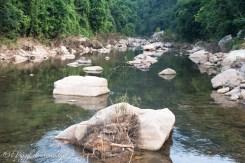 GTV fiume foresta