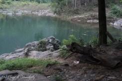 GTV foresta 1