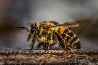 We Own Our Bees