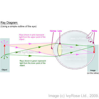 Image Formation Within The Human Eye Simple Ray Diagram Through
