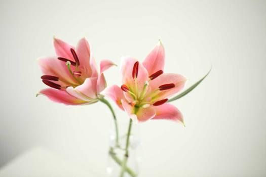 「たやすく書かれた詩」 尹東柱