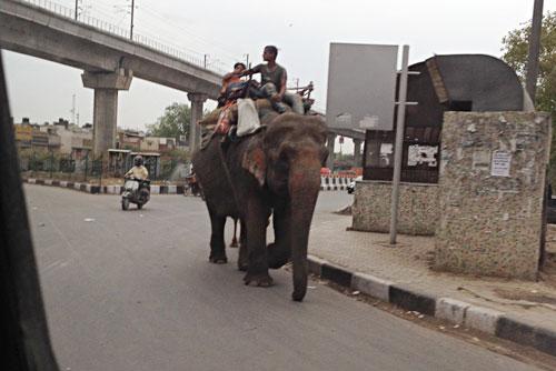 インドの道路では象も歩いています