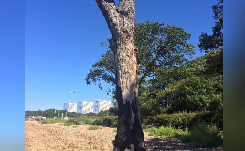 Elegy to a fallen tree