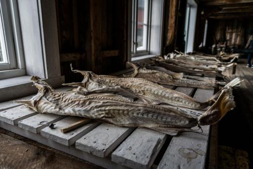 Stockfish Museum