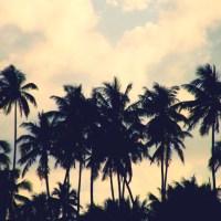 Une activité romantique pour votre séjour à Bora Bora : le catamaran !