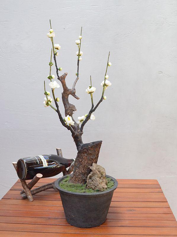 梅 盆栽 BO-051 62cm 【造花専門店 巖や】