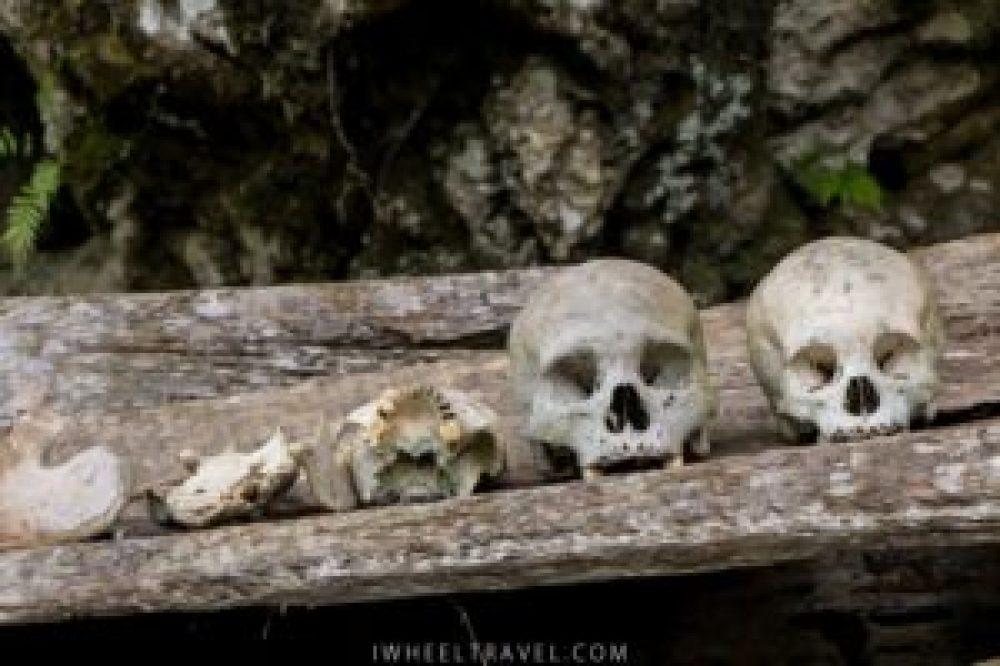 Quelques-uns des nombreux crânes.
