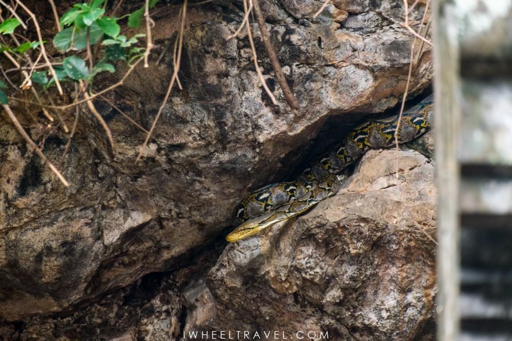Serpent au temple Goa Lawah.