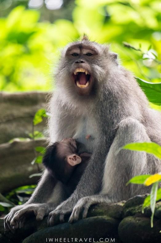 Ubud Monkey Forest, Bali.