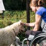 cani kart pyrénées handicap chiens de traineaux