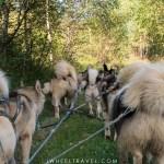 cani-kart chien de traineaux handicap pyrénées