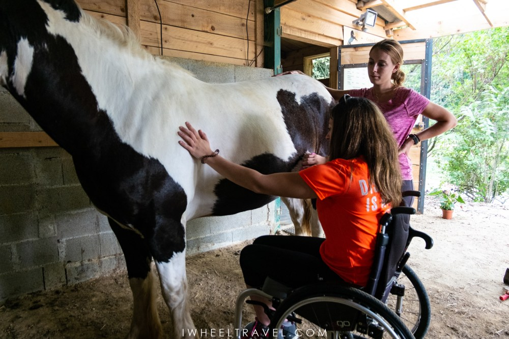 hippotherapy handicap disability horse