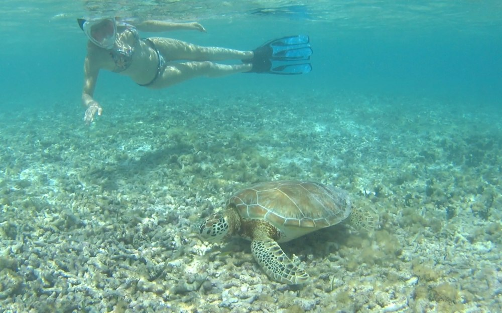 snorkelling guadeloupe tortue
