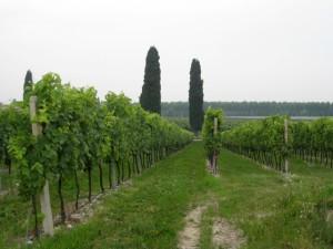 IWINETC 2013 Agent Fam Trip heads for Veneto