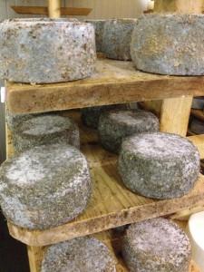 Cheese tasting iwinetc Friuli