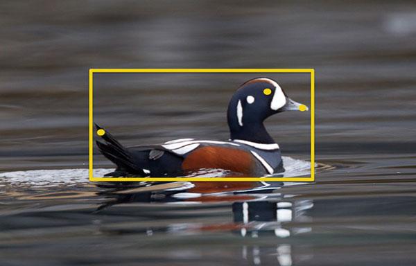 Сервис распознавания птиц доступен бесплатно всем желающим