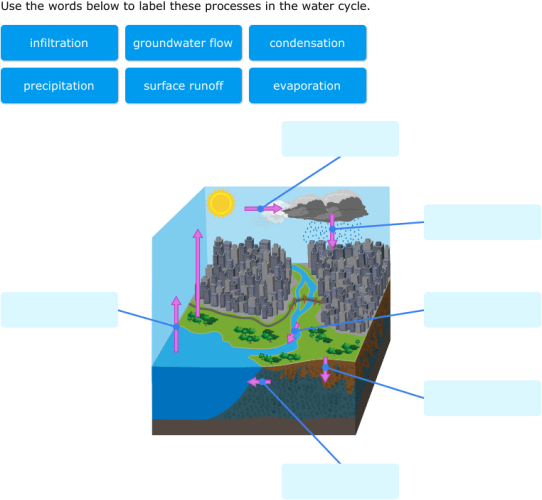 labelled diagram of water cycle 1998 dodge neon radio wiring ixl label parts diagrams 8th grade science