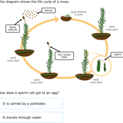 Life Cycle Of A Labeled Moss Diagram Strat Pickup Wiring Ixl And Fern Cycles 5th Grade Science