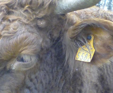 Adieu veaux vaches cochons poissons volailles et chevaux - Crédit photo izart.fr
