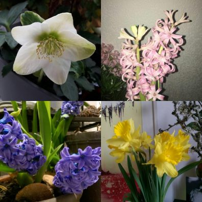 Flower Power Now - Crédit photo izart.fr