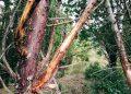 Cherche partenaire à grands bois et voix grave - Crédit photo izart.fr