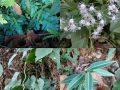 La forêt tropicale ça vous gagne - Crédit photo izart.fr