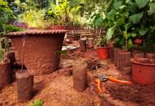 Un jardin botanique pour moi toute seule - Crédit photo izart.fr
